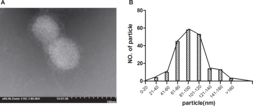 Production of an influenza Ah01/AA ca vaccine candidate using reverse genetics.The characteristics of Ah01/AA ca transfectant viruses were confirmed by visualizing the shape and size distribution of the virus particles. (A) Recombinant Ah01/AA ca virus particles were visualized using electron microscopy. (B) Ah01/AA ca virus particles were measured; 82% (out of 200 particles measured) ranged in size between 80 and 120 nm.