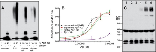 "Binding of Aβ isoforms to DEAE purified molecules including brevican. a. Western blot of Aβ isoforms used in binding assay to DEAE products in ""b"". b. Solid phase, dose-dependent, binding of Aβ1-42 isoforms (monomeric, oligomeric and fibrillar) and Aβ(1–16) to DEAE purified molecules. The mean EC50s (n = 5 binding assays) for multiple conformational Aβ binding to DEAE purified brain protein was evaluated using one way ANOVA followed by Tukey's multiple comparison test. EC50 for monomeric, oligomeric and fibrillar Aβ1-42 is significantly lower compared to the EC50 for Aβ1-16; (p < 0.05). c. Immunoprecipitation of brevican with mouse anti-Aβ 4G8 after soluble binding to DEAE product. Western blot was performed with mouse anti-brevican antibody. Lane identities: lane 1 DEAE extract only; lane 2 fibrillar Aβ only; lane 3 4G8 antibody only; lane 4 DEAE extract + monomeric Aβ; lane 5 DEAE extract + oligomeric Aβ; lane 6 DEAE extract + fibrillar Aβ. Anti-Aβ 4G8 pulled down brevican bound to oligomeric (lane 5) and fibrillar Aβ (lane 6). Lower molecular weight bands correspond to heavy and light IgG chains. Although all three isoforms of Aβ1-42 bound to brevican, binding to monomeric Aβ was markedly lower than binding to oligomeric and fibrillar Aβ"