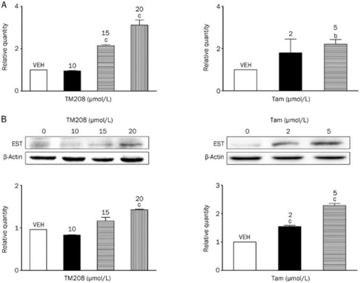 TM208 and Tam induced the expression of EST at the mRNA and protein levels. (A) TM208 and Tam increased the mRNA expression of EST in MCF-7 cells after 7 d of treatment. (B) TM208 and Tam also increased the protein expression of EST in MCF-7 cells after 7 d of treatment. The expression of β-actin was included as a loading control. VEH, vehicle. bP<0.05, cP<0.01 vs vehicle.