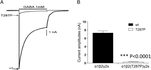 Expression of mutant β2 (p.Thr287Pro) subunits reduces the peak current amplitudes of γ-aminobutyric acid-A (GABAA) channels. (A) Representative GABA current traces obtained following rapid application of 1 mM GABA for 4 s to lifted HEK293T cells voltage-clamped at −20 mV. The current traces from GABAA receptors containing the mutant β2(T287P) was compared with their respective wild-type (wt) α1β2γ2s current traces. (B) Bar graph shows the average peak current from cells expressing wt and mutant GABAA receptors. Values represent mean±SEM (n=10 patches). Statistical differences were determined using unpaired t-test; **** indicates p<0.0001 compared with the wt condition.