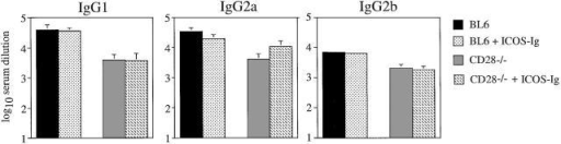 Blocking ICOS does not affect antibody isotype switching after infection with LCMV. CD28−/− mice and C57BL/6 control mice (BL6) were infected with 200 PFU LCMV) and treated with ICOS-Ig or control IgG1 (solid bars) starting at day 0 every 2 d until day 10. Blood was taken 12 d after infection, and LCMV-specific IgG1, IgG2a, and IgG2b titers were determined by ELISA. Data are representative of two separate experiments.