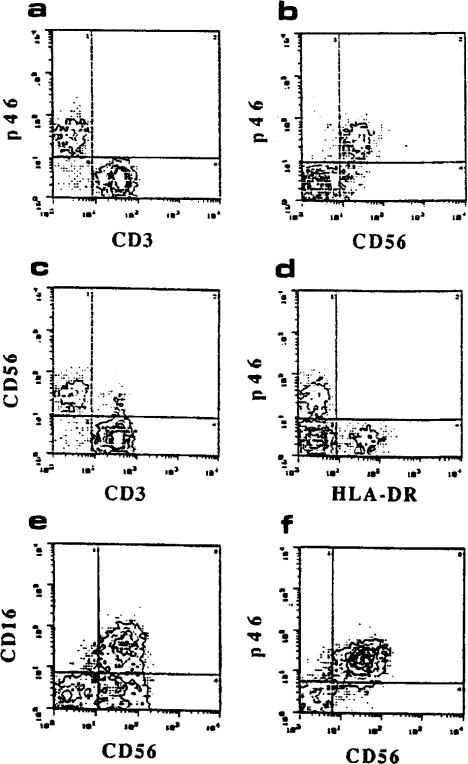 Deglycosylation and  proteolytic digestion of p46 molecules. (a) CD16 (lanes A–D) or p46  (lanes E–H) molecules isolated from  a surface labeled NK cell population  were treated with neuraminidase  (lanes B and F), neuraminidase plus  O-glycanase (lanes C and G), or  N-glycanase (lanes D and H). Untreated molecules are shown in lanes  A and E. Samples were run in an  11% SDS-PAGE under reducing  conditions. (b) p46 and CD16 molecules immunoprecipitated from a  surface labeled NK cell population  were analyzed by SDS-PAGE. Bands  corresponding to p46 (lanes A, C, E,  and G) or CD16 (lanes B, D, F, and H) molecules were excised from the gel and analyzed by SDS-PAGE on a 15–20% gradient gel under reducing conditions after digestion with V8 protease (lanes C and D) or papain (lanes G and H). In lanes A, B, E, and F untreated molecules are shown.