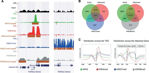 Landscape of ASH2 binding and histone methylation profiles in the wing imaginal disc. (A) UCSC Genome Browser overview of the ChIP-Seq reads across two regions of chromosome 3R: from the top, the input sample, ASH2, H3K4me3, H3K27me3, H3K36me3 and RefSeq genes. The height of the peaks represents the number of reads obtained for each mark in each region by ChIP-Seq. The enriched regions (targets) are shown in brown boxes below the corresponding sample. (B) Venn diagrams showing the intersection between ASH2, H3K4me3 and H3K27me3 (left) or H3K36me3 (right). (C) Projection of ASH2, H3K4me3, H3K36me3 and H3K27me3 over the TSS and the idealized gene.