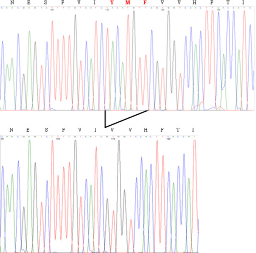 Rhodopsin mutation in exon 3. Detection of the novel c.614–622del (p.Y206-F208del) mutation in the RHO gene from a sequence analysis after cloning of both alleles. The electropherogram representing the normal sequence is shown on top while the deleted one is presented below.