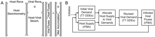 Format and method for the integrated simulation.(A) The combined host-viral form of the integrated FBA problem is a stoichiometric matrix (Stoich.) that can be considered as blocks: left, the independent host stoichiometric matrix; right, viral reactions consuming host metabolites. The combined matrix may be further organized by host metabolites that do not supply viral reactions (rows of the  matrix in the upper right) and host metabolites that are consumed by viral reactions (rows at the bottom aligned with Host-Viral Stoich). The vector of fluxes contains host reaction rates at the top and viral reaction fluxes at the bottom to multiply properly with the host-left and viral-right organization of reactions in the stoichiometric matrix. Accumulation is allowed at the intersections of host viral metabolism (Met. Accumulation; right), but the steady-state assumption is enforced for host-only metabolites (0). A simplified flowchart (B) of the algorithm for integrated simulations, where Initialize indicates the definition of media nutritional conditions and the start of iterations across time, simulating at each integration time point the individual T7 ODEs and E. coli FBA, then reconciling the viral rate metabolite demand with host network state supply (Allocate). Both models are then recalculated to incorporate information on their mutual constraint (Revised Viral Demand, and Infected Host Fluxes). Update of environmental information and regulatory constraints at the initiation of each integration step (not specifically denoted on figure) further constrains the host-viral system.
