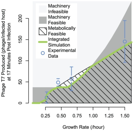 Variation in the limiting factor for phage production across host growth rates.Modeling results overlaid with experimental phage production measurements. The machinery-feasible region represents phage production values from T7 ODEs alone, with the growth rate supplied to correlations for availability of the host replication machinery; phage production values above the machinery-feasible boundary are considered machinery infeasible. The upper boundary of the metabolically feasible region was calculated using the integrated simulation, but with access to excess host replication factors, which we simulated by multiplying the host growth rate from FBA by a factor of 1.25 when it was passed to the T7 ODE host machinery correlations. Growth rate variation for calculating limitation boundaries and integrated simulation was evaluated with a set of modified flux bounds, with most growth rate sampling values simulated with both carbon and oxygen limitation, which produced essentially identical phage production predictions (resulting points lie within width of the line displayed). Error bars are standard deviation of n = 3.