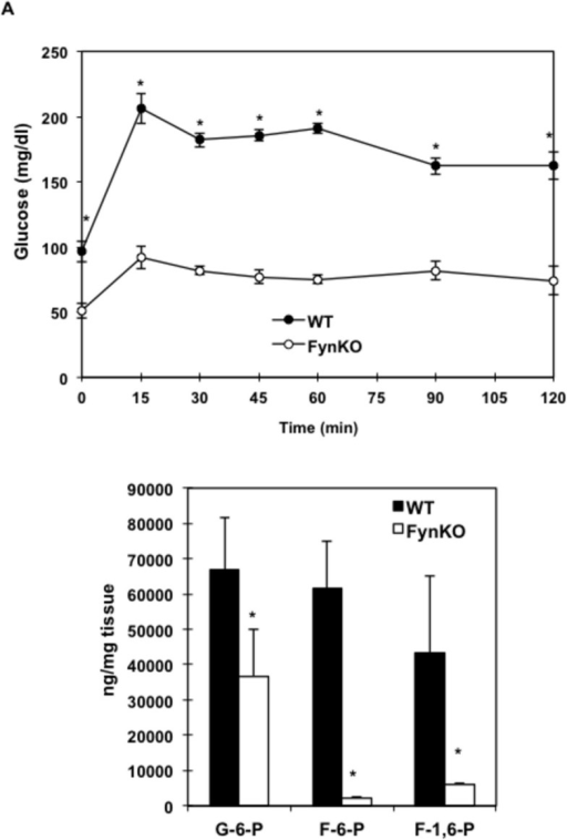 Fructose-driven glucose production in 16-hour fasted wild type (WT) and FynKO mice (A) Fructose tolerance test in fasted wild type (WT, black circles) and FynKO (open circles) mice.*p<0.05. n= 5 WT, n=5 FynKO, experiments were repeated 4 times. (B) Hexose phosphate levels in liver of wild type (WT) and FynKO mice: glucose-6-phosphate (G-6-P), fructose-6-phosphate (F-6-P) and fructose-1,6- bisphosphate (F-1,6-P). *p<0.05, n=3 WT, n=3 FynKO.