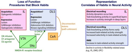 Schematic of known habit-related mechanisms using measures of behavioral outcome-sensitivity. At left, diagram of loss-of-function results in which habits are suppressed or blocked following neural interventions. The IL cortex is viewed as necessary for habit expression due to greater outcome-sensitivity in behavior resulting from lesions, temporary pharmacologic or optogenetic inhibition, or manipulations of dopamine-containing input including intra-IL infusion of dopamine, a D1 antagonist, or a D2 agonist (Coutureau and Killcross, 2003; Killcross and Coutureau, 2003; Hitchcott et al., 2007; Smith et al., 2012; Barker et al., 2013). The DLS is similarly needed for habit expression, as demonstrated through lesions, chemical inhibition, molecular signaling inhibition, gene deletion, and dopaminergic denervation (Yin et al., 2004, 2006; Faure et al., 2005; Yu et al., 2009; Gourley et al., 2013;). Burst firing of dopaminergic neurons is also needed, demonstrated by NMDA-R1 receptor knockout (Wang et al., 2011). Interaction between the CeA and the DLS, through unknown anatomical routes, is required as well (Lingawi and Balleine, 2012). Although lesions confound acquisition and expression phases of habits, a role for IL in habit acquisition specifically has been shown using optogenetics (Smith and Graybiel, 2013a). At right, diagram and list of some key features of IL and DLS neural activity related to habit formation and expression as uncovered from electrical recording and fMRI approaches (Tang et al., 2007; Tricomi et al., 2009; Thorn et al., 2010; Gremel and Costa, 2013; Smith and Graybiel, 2013a). Concomitant to these dynamics are a decline in activity in areas that might oppose habits, including the PL, DMS, and OFC (Thorn et al., 2010; Gremel and Costa, 2013; Smith and Graybiel, 2013a). IL, infralimbic cortex; DLS, dorsolateral striatum; VTA, ventral tegmental area; CeA, central nucleus of the amygdala; PL, prelimbic cortex; DA, dopamine; DMS, dorsomedial striatum; OFC, orbitofrontal cortex.