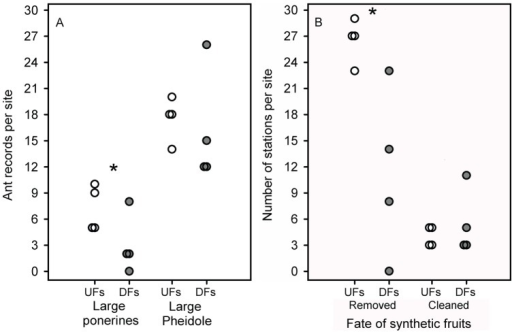 Ant attendance and ant behaviour toward synthetic fruits.(A) Occurrence of particular ant groups and (B) occurrence of beneficial behaviours at sampling stations. Experiments with synthetic fruits were carried out in two diverging forest types in the Atlantic forest, Southeast Brazil, undisturbed (white circles; four sites) and fragmented forest sites (gray circles; four sites). The ant groups (large ponerines and large Pheidole spp.) were those whose behaviours were considered as potentially beneficial to 'seeds' (either removing the entire 'fruit' or cleaning the 'pulp' in situ) during the 22-hour experiment. The number of stations (y-axis) in (B) corresponds to those stations having at least one of the five seeds either removed or cleaned by ants. Asterisks indicate significant differences (p<0.5) between forest types.