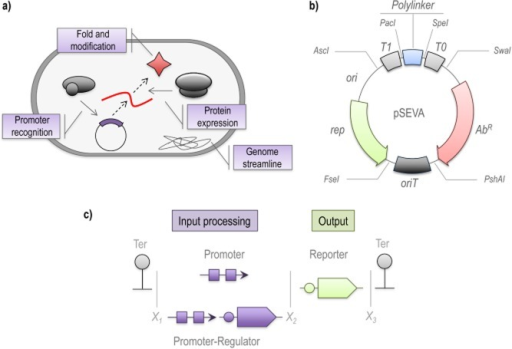 Synthetic Biology may overcome limiting steps in activity-based metagenomic library screening. Current bottlenecks in functional metagenomics are related to (A) limitations in the host capabilities, (B) the performance of the genetic tools and (C) the availability of efficient screening methods.A. In the case of the host, critical steps related to the recognition of transcriptional and translational signals, as well as the folding and modification of the expressed enzyme need to be enhanced. Host performance might be improved by reducing the metabolic burden related to the expression of unnecessary genes.B. The use of semi-synthetic, high-efficiency genetic tools is essential for the construction of metagenomic libraries that can be maintained and screened in a wide number of microorganisms. The example shows the pSEVA bacterial vector, which is endowed with several functional features such as terminators, origin for transfer and an extensive polylinker optimized for use in several bacterial hosts.C. Genetic circuits constructed by combining input modules (e.g. promoters and regulators) and output devices (such as reporter proteins) assembled with a standard format that uses the same sets of restriction enzymes (represented by X1, X2, etc.). Such circuits facilitate the screening of enzymatic activities in metagenomic libraries. The standardization of the assembly process facilitates the combination of several independent modules to construct sophisticated activity-trigged biosensors.