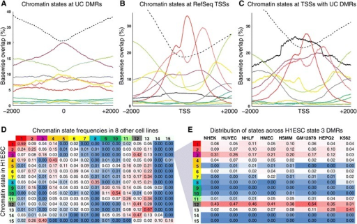 Chromatin state characterization of UC DMRs. (A) Frequency of H1ESC chromatin states for all UC DMRs (N = 5,453) calculated per base across 4 kb windows centered on each DMR midpoint. (B) Frequency of H1ESC chromatin states for all human RefSeq promoters calculated per base across 4 kb windows centered on each RefSeq TSS (N = 27,397). The corresponding frequency of UC DMR overlaps is also shown (solid black line). (C) Frequency of H1ESC chromatin states from RefSeqs having a UC DMR in the 4 kb window centered on its TSS (N = 5,290). (D) Chromatin states for H1ESC and eight additional cell lines (listed in panel E; Ernst et al. [17]). For UC DMRs in a H1ESC chromatin state, the frequencies of the typical chromatin state in the eight other cell types are shown. (E) For UC DMRs in the 'Inactive/poised promoter' state in H1ESC, the frequencies of other chromatin states are shown for the eight additional cell types. The 15 Chromatin states are color coded as in Figure 1 (chromatin states 13 to 15 are represented by a dashed line in panels A to C).