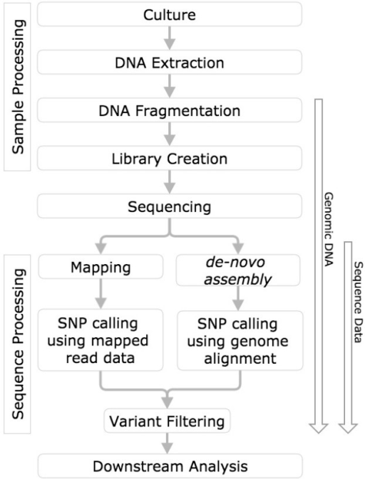 SNP calling workflow diagram. Horizontal boxes represent steps in the workflow and arrows to the left indicate steps in the workflow challenged with reference genomic DNA, and sequence data.