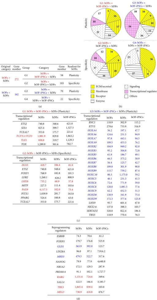 Characterization of hOFs in comparison with hDFs and hOF-iPSCs. (a) Strategy to define the characteristics of hOFs. The differentially expressed gene groups between hOFs and hDFs were rearranged by the expression similarity with hOF-iPSCs. The readout for hOFs indicates the characteristics of hOFs. Each gene in G1–G4 is listed in Supplementary Tables S4–S7, respectively. (b) The characterization of each gene group categorized in (a). Numbers indicate the percentage of gene numbers in the individual categories compared with total numbers. The groups colored in yellow show the molecules receiving environmental stimuli. The groups colored in pink represent molecules involved in controlling cell fate. (c) The list of individual transcriptional regulators found in (b). Each indicated number is the average signal value in each cell type. (d) Expression levels of reprograming enhancers among the three cell types. Each indicated number is the average signal value in each cell type. Red: hOFs > hDFs > hOF-iPSCs; blue: hOFs = hDFs > hOF-iPSCs. The full names of each gene listed in (d) are shown in Supplementary Table S8.