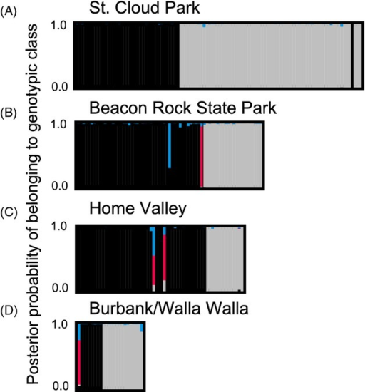 STRUCTURE bar plots for four paired sites at (A) St. Cloud Park; (B) Beacon Rock State Park; (C) Home Valley; and (D) Burbank/Walla Walla, WA, depicting posterior probabilities of individual R. pomonella black hawthorn fly genotypes (on left) and R. zephyria snowberry fly genotypes (on right) belonging to one of four genotypic classes: pure R. pomonella origin (black), pure R. zephyria (light gray), F1 hybrid (red), or backcross (blue), based on genotypes at 19 microsatellite loci. Bars along the x-axis represent individual flies.