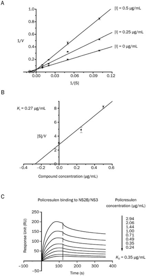 Policresulen as a competitive inhibitor exhibited binding affinity to DENV2 NS2B/NS3 protease. (A) Kinetic analysis of policresulen against NS2B/NS3 protease via double reciprocal plots of 1/V versus 1/[S]. (B) Secondary plot of [S]/V versus different concentrations of policresulen. The inhibitory constant value was then determined using linear regression analysis. (C) Binding ability of policresulen to DENV2 NS2B/NS3 protease. The KD value of policresulen to NS2B/NS3 protease was fitted with 1:1 Langmuir binding model by BiacoreT200 evaluation software. Rmax for policresulen binding to NS2B/NS3 protease was 257.8 Ru.