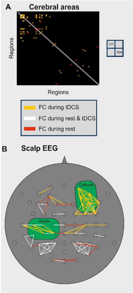 New functional connections are established during tDCS: among cortical areas, Panel A; and among scalp EEG electrodes, Panel B.