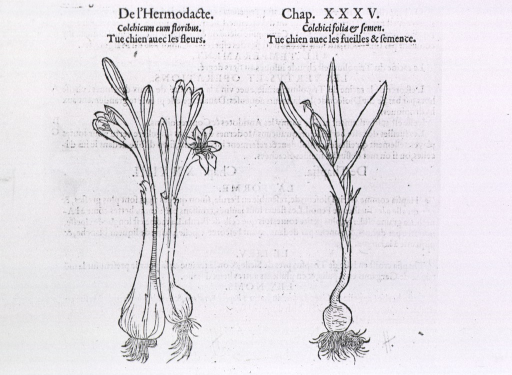 <p>Two plants showing roots, stems, flowers, and foliage.</p>