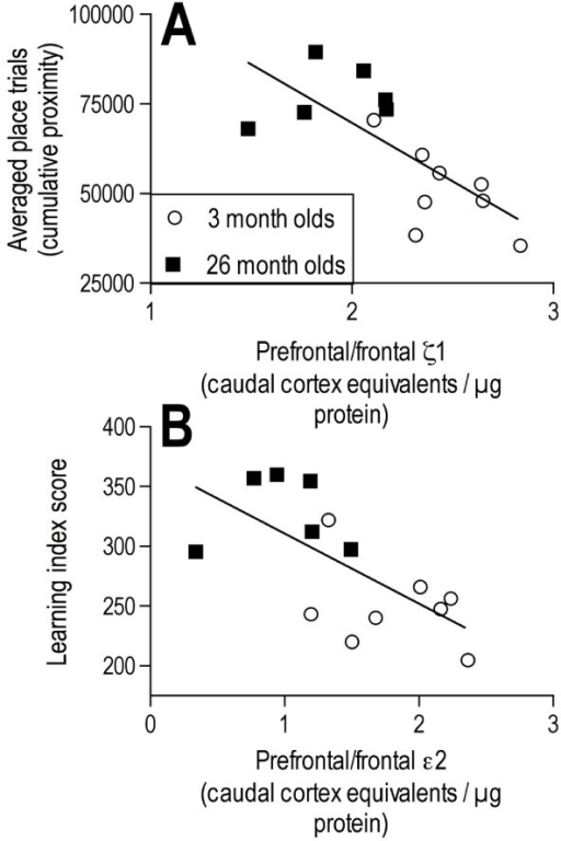 Relationships between reference memory performance and protein expression of NMDA receptor subunits. A, B: Correlation graphs of ζ1 (A) and ε2 (B) expression in the prefrontal/frontal cortex versus averaged place (A) or learning index score (B) derived from probe trial performance in a two-day reference memory task. Correlation coefficients are presented in Table 1. Proximity measurements are given in tracker system units.