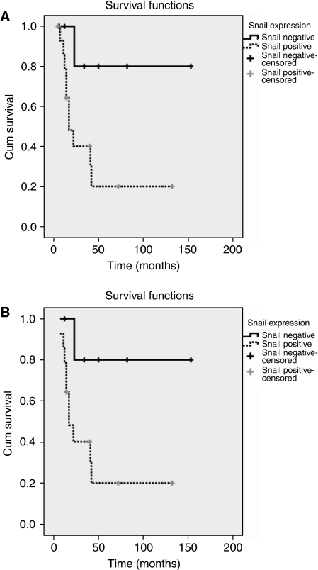 Kaplan–Meier curve of patients with positive and negative Snail expression: Note the decreased survival of Snail-expressing ACCs. (A) Survival in 24 patients with ACC (two were excluded because of disease-unrelated death), P=0.02. (B) Survival in 20 patients with ACC (four were excluded as the follow-up was minor 12 months, two were excluded due to disease-unrelated death), P=0.01.