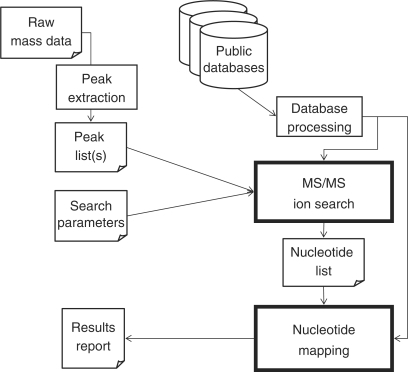 Schematic diagram of the Ariadne database search program. Ariadne evaluates tandem MS data of nucleolytic fragments of RNA using a unique two-step algorithm, 'MS/MS ion search' and 'nucleotide mapping'. See text for details.