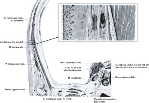 Anatomy Of The Superficial Temporal Artery Located Betw Open I