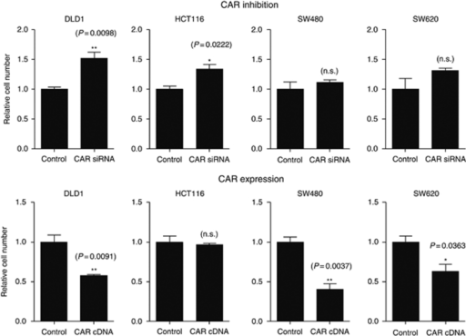 Influence of CAR on colon cancer cell proliferation. Proliferation was determined in DLD1, HCT116, SW480, and SW620 cells stably transfected with either a CAR-specific siRNA (upper panels) or a human full-length CAR expression vector 'hCARpcDNA3.1' (lower panels) and 'vector only' controls. Data represent typical results from a series of three independent experiments.