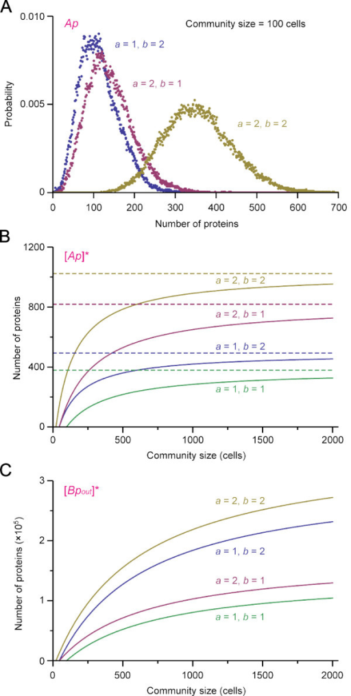 Influence of gene copy number on gene expressions at steady state. (A) Probability distribution of [Ap] at the end of stochastic simulations for the community size n = 100 (t = 10000 min). Plots for different combinations of gene copy numbers are shown as indicated. (B) [Ap] at steady state ([Ap]*) is plotted as a function of community size for different gene copy numbers as indicated. [Ap]* is calculated according to Eqs.35 in additional file 1 with parameter values in Table 1, ε = 5.78 × 10 -7. Dotted lines are the theoretical maxima . (C) [Bpout] at steady state ([Bpout]*) is plotted as a function of community size for different gene copy numbers. Parameter values are the same as in (B). [Bpout]* also approaches to the theoretical upper limit  (not shown;  ≈ 358000 for a = 2, b = 2; 308000 for a = 1, b = 2; 172000 for a = 2, b = 1; 143000 for a = 1, b = 1).