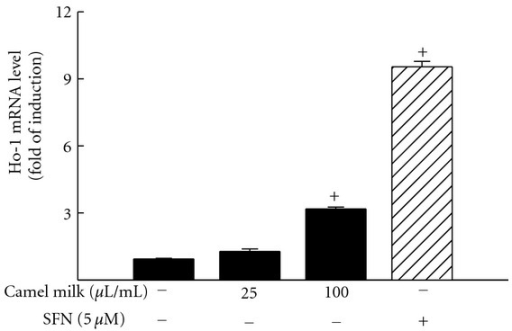Effect of camel milk on Ho-1 mRNA expression level. Hepa 1c1c7 cells were treated for 6 h with increasing concentrations of fat-free camel milk (0, 25, and 100 μL/mL) or SFN (5 μM), as a positive control. The amount of Ho-1 mRNA was quantified using real-time PCR and normalized to β-actin housekeeping gene. Duplicate reactions were performed for each experiment, and the values represent mean of fold change ± SEM. (n = 4).   +P < 0.05 compared with control (sterile water-treated cells).