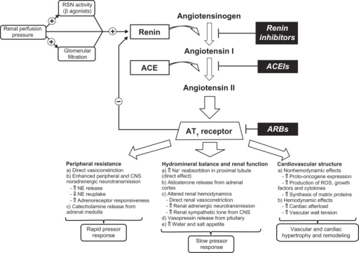 Schematic illustration of the RAAS and the main pathways by which RAAS regulates cardiovascular function.148,149Abbreviations: ACE, angiotensin-converting enzyme; ACEIs, angiotensin-converting enzyme inhibitors; ARBs, angiotensin receptor blockers; CNS, central nervous system; NE, norepinephrine; RAAS, renin–angiotensin–aldosterone system; RSN, renal sympathetic nerve; ROS, reactive oxygen species.