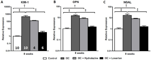 Effects of anti-hypertensive treatments on gene expression of renal injury markers.Hydralazine treated rats expressed elevated levels of the renal injury markers KIM-1, OPN and NGAL. When compared with the untreated RAS-stimulated rats, gene expression levels demonstrated a decrease yet remained significantly elevated (A-C). This was in sharp contrast with losartan which caused a normalization of all parameters. PAI-1 expression was unaltered whereas nephrin was significantly decreased by hydralazine when compared with untreated RAS-stimulated rats (D+E). The n for each group is presented in the bars of figure A. I3C, Indole-3-Carbinol; KIM-1, Kidney injury molecule-1; NGAL, neutrophil gelatinase associated lipocalin; PAI-1, plasminogen activator inhibitor-1.