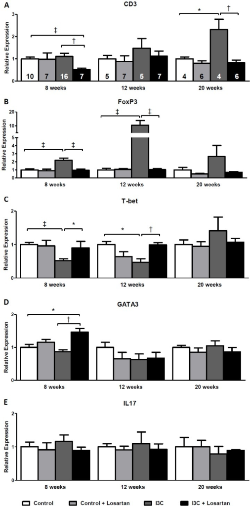 Long-term effects of AT1-receptor blockade on renal gene expression of T-cell markers.CD3 expression increases gradually and reaches statistical significance at 20 weeks of age in the RAS-stimulated rats. (A). FoxP3 expression demonstrated an elevation at 8 weeks of age in the RAS-stimulated rats, this increase became even more pronounced 4 weeks later and was still present, yet not significant, at 20 weeks of age (B). RAS-stimulated rats demonstrated a significant decrease in T-bet expression. This decrease was still present 4 weeks later, but disappeared at 20 weeks of age (C). Losartan treatment completely prevented the effects on CD3, FoxP3 and T-bet expression. GATA3, was only increased in the RAS-stimulated rats which received losartan treatment. After stopping stimulation and treatment GATA3 expression returned back to normal (D). Finally, no differences were observed in renal IL17 expression (E). The n for each group is presented in the bars of figure A. FoxP3, forkhead box P3; GATA3, GATA binding protein 3; I3C, indole-3-carbinol; IL, interleukin; T-bet, T-box expressed on T-cells; Wks, weeks.