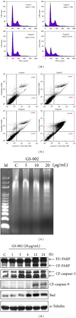 The propolis derivative, GS-002, induced cell apoptosis in human hepatoma cells. Hep3B cells were treated with various concentrations of GS-002 for 24 h, and (a) the subG1 population was determined by a flow cytometric analysis; (b) apoptotic cells were determined by a flow cytometric analysis with annexin-V/PI staining; and (c) the DNA fraction was extracted and chromatographed by agarose gel electrophoresis. (d) Hep3B cells were treated with 20 μg/mL of GS-002 for the indicated time periods. Total cell lysates were used to detect the protein expression of full-length PPAR (FU-PPAR), cleaved form of PPAR (CF-PPAR), cleaved form of caspase-3 (CF-caspase-3), cleaved form of caspase-9 (CF-caspase-9), Bad, and α-tubulin by Western blotting.
