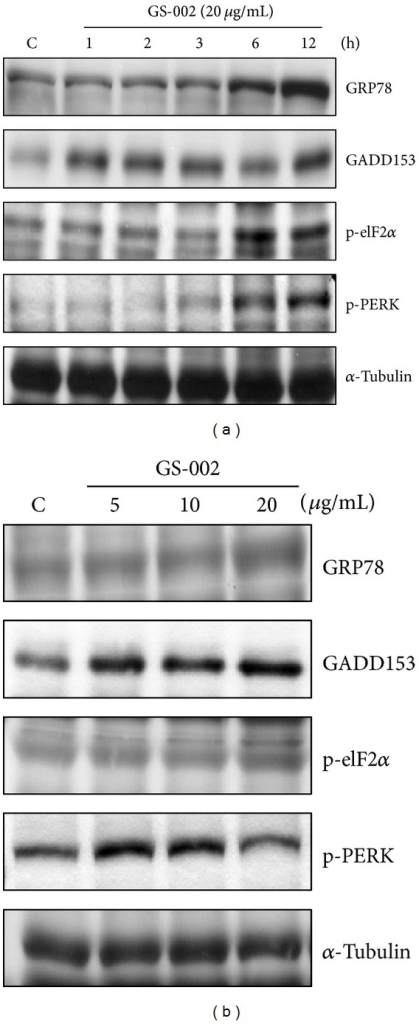The propolis derivative, GS-002, induced endoplasmic reticular stress in human hepatoma cells. Hep3B cells were treated (a) with 20 μg/mL GS-002 for the indicated time periods or (b) with various concentrations of GS-002 for 12 h. Total cell lysates were used to detect protein expressions of GRP78, GADD153, phospho-eIF2α (p-eIF2α), phosphor-PERK (p-PEK), and α-tubulin by Western blotting.