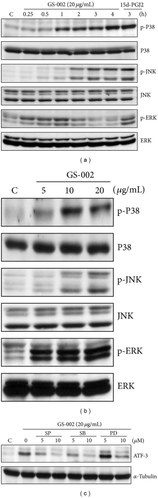 The propolis derivative, GS-002, induced ATF-3 expression that was mediated by MAPK pathways. Hep3B cells were treated with (a) 20 μg/mL GS-002 for the indicated time periods, or (b) with various concentrations of GS-002 for 1 h. Total cell lysates were used to detect protein expressions of p38, phosphor-p38 (p-p38), c-Jun N-terminal kinase (JNK), phospho-JNK (p-JNK), extracellular signal-regulated kinase (ERK), and phospho-ERK (p-ERK) by Western blotting. Ten micrograms of 15-deoxy-Δ12,14-prostaglandin J2 (15d-PGJ2) was used as a positive control. (c) Hep3B cells were pretreated with 5 and 10 μM of the p38 inhibitor, SB203580, the ERK inhibitor, PD98059, or the JNK inhibitor, SP600125, for 90 min, then treated with GS-002 (20 μg/mL) for another 12 h, and the ATF-3 protein level was detected by Western blotting.