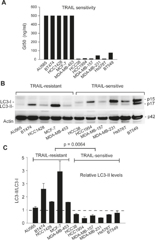 TRAIL resistance correlates with the expression of autophagosome marker LC3-II in breast cancer cell lines(A) Differential sensitivities of the indicated cell lines to TRAIL-induced cytotoxicity. Cells were grown onto 96-well plates and treated with serial doses of rhTRAIL (5 to 100 ng/mL) for 24 h. Cell viability was determined by a colorimetric assay after MTT staining. GI50 values were derived from the dose-response curves and were used to group the cell lines into TRAIL-resistant (GI50 >500 nM) or TRAIL-sensitive (GI50 <100 nM). (B) LC3 protein expressions in cells grown under healthy conditions. Individual cell lines were cultured in nutrient-rich medium. At 80% confluence, cells were harvested and analyzed by western blotting. LC3 immunoblots detect two bands: LC3-I at an apparent mobility of 18 kDa and the lipidated form LC3-II at 16 kDa (moves faster than LC3-I on SDS-PAGE). LC3-II is known to associate with autophagosomes and therefore serves a marker of active autophagy. β-actin was detected as a loading control. (C) Densitometry analysis of the immunoblots in (B) yielded the relative levels of LC3-II to LC3-I in individual cell lines. Shown are means and standard deviations of three independent experiments. TRAIL-sensitive cells are characterized by a LC3-II/LC3-I ratio less than 1 arbitrary unit. Statistical difference in LC3-II/LC3-I ratios between TRAIL-resistant and TRAIL-sensitive cell lines was determined by Fisher's PLSD test.