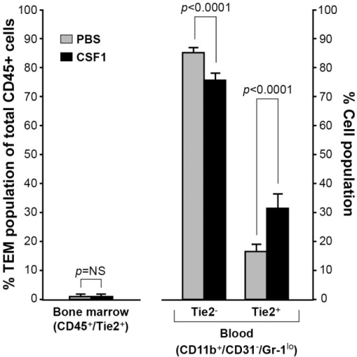 CSF1 expands the TEM population in peripheral blood.To reach serum levels of CSF1 similar to breast cancer patients and determine that effect on TEM expansion, PBS or CSF1 (20 ng/ml) was intravenously injected into non-tumor bearing wild type C57Bl/6 female mice every other day for a total of three treatments. Bone marrow and atrial blood was collected and immunostained with CD45 and Tie2 antibodies (for bone marrow) or CD11b, CD31, Gr-1, and Tie2 antibodies (for blood). There was no difference in the percentage of TEMs in the bone marrow of the PBS- and CSF1-treated mice. In peripheral blood, CSF1 treatment significantly reduced the percent of CD11b+/CD31+/Gr-1lo/Tie2- cells while significantly increasing CD11b+/CD31+/Gr-1lo/Tie2+ TEMs. N = 5 mice per group and results represent the mean ± SEM of percent total CD45+ and CD45+/Tie2+ cells from bone marrow, and the percent of CD11b+/CD31-/Gr-1lo/Tie2- and CD11b+/CD31-/Gr-1lo/Tie2+ TEMs in peripheral blood.