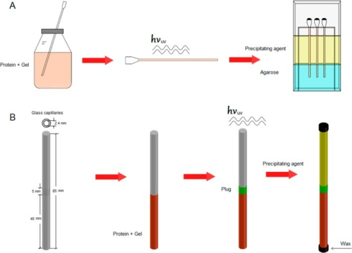 Experimentalsetups. (A) For the GAME configuration, the proteinis mixed with the PEG hydrogel and polymerized prior to the introductionof the capillary in the agarose gel. (B) For the 3L configuration,the protein–agarose or the protein–PEG (prepolymeric)solution is first loaded (first layer). For the latter, the protein–PEGsolution was subjected to UV treatment to induce the polymerization.This was followed by the gentle addition of the prepolymericsolution of PEG (20, 35, or 50% w/w concentrations), which was alsopolymerized by UV exposition (second layer or plug). The last stepin both experimental setups is the addition of the crystallizationsolution (third layer).