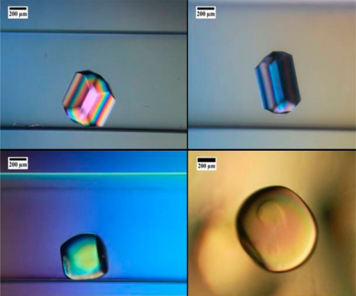 Lysozyme crystals grownat constant temperature in PEG hydrogelswith different polymer compositions: 5% (w/w) (top left), 7% (w/w)(top right), 9% (w/w) (bottom left), and 10% (w/w) (bottom right).