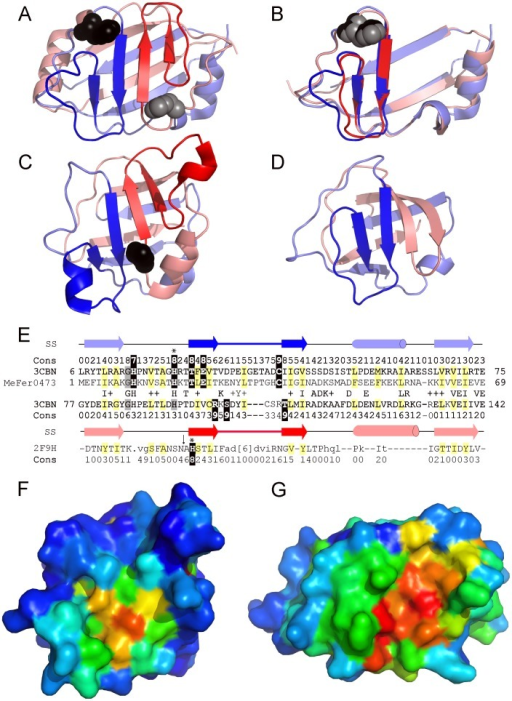 ECOD recognizes novel evolutionary relationships.A) Duf371 (3cbn) forms an 8-stranded β-barrel from intertwined β-strands of a tandem structural duplication. The N-terminal half (blue shades) includes an overside connection between adjacent β-strands (blue) that follows a conserved His (black spheres). The symmetrically related C-terminal half (red shades) includes a similar overside connection (red) following a less conserved His (gray spheres). B) The Duf371 C-terminal repeat (salmon) is rotated about the Z-axis to superimpose (RMSD 1.3) with the N-terminal repeat (slate). C) The GutA-like PTS system IIA component (2f9h) forms a similar duplicated β-barrel. An invariant His in the C-terminal half likely represent the PTS IIA phosphorylation site. D) The PK β-barrel domain-like fold (1pkla1) displays a similar intertwined topology, but retains only a single overside connection (blue) in the N-terminal half. E) PSI-BLAST alignment of the Duf371 repeats detected with Mefer0473 sequence supports the duplication event, with sequence similarities indicated between N-terminal and C-terminal halves. A structure-based alignment of the 2F9H C-terminus is included below. Structural elements (arrow for strand and cylinder for helix) and conservations (calculated by Al2Co [59]) are indicated above/below the corresponding sequences. Conserved positions are highlighted yellow (mainly hydrophobic) and black (polar). Surface representations of F) PTSIIA in the same orientation as in panel C and G) Duf371 in the rotated orientation of panel B are colored in rainbow according to conservation, from blue (less) to red (more).