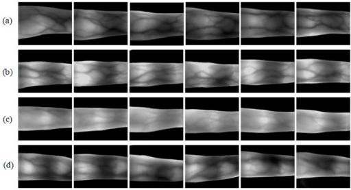 Image samples from our available database MMCBNU_6000 [21]: (a–d) are finger vein image samples collected from four volunteers P1–P4, respectively. Each row shows six images from six different fingers of one individual.