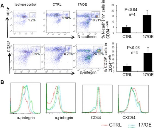 The adhesion molecule expression on CB CD34+ cells after miR-17 overexpression. a The expression of N-cadherin and β1-integrin on CB CD34+ cells after miR-17 overexpressing (17/OE) or control (CTRL) cells was analyzed by flow cytometry (left panels). The results are expressed as mean ± SD from multiple independent experiments (right panels). b Flow cytometry analysis of the expression of α4-integrin, α5-integrin, CD44 and CXCR4 on miR-17 overexpressing CB CD34+ cells (green and blue lines) and CTRL CD34+ cells (red line)