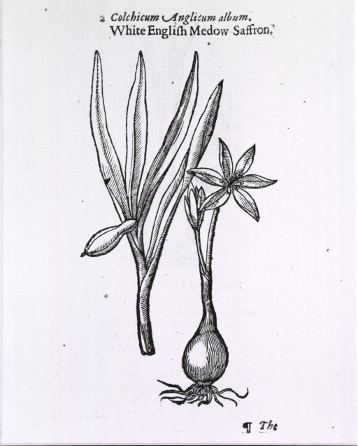 <p>Roots, stem, foliage, and flower of the plant are shown.</p>