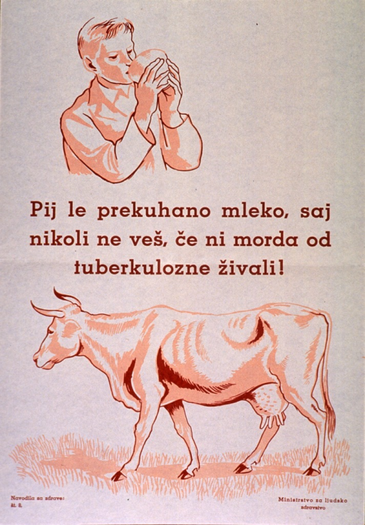 <p>Off-white poster with orange-brown lettering.  Visual images are illustrations of a young man drinking from a cup and a cow standing in a pasture.  Title in center of poster, between illustrations.  Title appears to address drinking unpasteurized milk and the risk of contracting tuberculosis.</p>