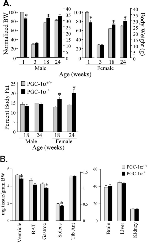 Evidence for Tissue-Specific Growth Abnormalities and Mild Sex-Limited, Age-Dependent Obesity in PGC-1α−/− Mice(A) The bars represent total body weight for the ages indicated for male (left graph) and female (center graph) PGC-1α+/+ and PGC-1α−/− mice. The body weight (BW) of the 1-wk-old PGC-1α−/− mice was normalized to that of PGC-1α+/+ littermates, which was assigned a value of 100 (left axis). For the 3-, 18-, and 24-wk time points, absolute weights of PGC-1α−/− mice were compared to age-matched controls (right axis). Percent fat as determined by DEXA scanning for PGC-1α+/+ and PGC-1α−/− mice (right graph). The results represent n = 4 (males) and n ≥ 11 (females) for each genotype at 24 wk. * p < 0.05 compared to corresponding PGC-1α+/+ mice.(B) The bars represent organ weights corrected to body weight for 3-wk-old male and female PGC-1α+/+ and PGC-1α−/− mice. The error bars represent ± SEM. Results represent n ≥ 14 for each group. * p < 0.05 compared to corresponding PGC-1α+/+ mice.