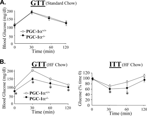 Female PGC-1α−/− Mice Are More Glucose Tolerant and Insulin Sensitive Compared to PGC-1α+/+ on High-Fat Diet(A) At 4.5 mo of age, glucose tolerance testing (GTT) was performed on female PGC-1α+/+ (n = 6) and PGC-1α−/− (n = 6) mice maintained on standard chow.(B) At 8 wk of age, PGC-1α+/+ (n = 8) and PGC-1α−/− (n = 11) mice were provided a diet containing 43% of its calories from fat (HF chow). The graphs depict blood glucose levels ± SEM in PGC-1α−/− mice during GTT (left graph) and ITT (right graph) studies. Studies were performed 5 wk (GTT) and 6 wk (ITT) after the initiation of the high-fat diet. * p < 0.05 compared to PGC-1α+/+ mice at the same time point.