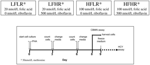 Experimental Design. A schematic diagram of a simple nutrient array design that was used to study the interactive effects of folic acid (F) and riboflavin (R) at low (L) and high (H) physiological concentration. In this study by Kimura et al 2004 [28] the folic acid-riboflavin interactive effects in four different combinations (LFLR, LFHR, HFLR, HFHR) on DNA damage were measured using the CBMNcyt assay in lymphocytes that were homozygous for the common or rarer allele of the C677T polymorphism in the methylenetetrahydrofolatereductase (MTHFR) gene. Riboflavin is a precursor of the FAD cofactor for MTHFR and folic acid is a precursor for 5,10-methylenetetrahydrofolate the substrate for MTHFR. Cell growth and homocysteine were also measured. N = 7 C677C, N = 7 T677T