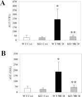 Lack of CCL2 reduces aminotransferase levels in Balb/C miceWT or CCL2-KO mice were fed for 8 weeks on the control diet or on the MCD diet. WT Cnt, WT animals fed on the control diet; KO Cnt, CCL2-KO animals fed on the control diet; WT MCD, WT animals fed on the MCD diet; KO MCD, CCL2-KO animals fed on the MCD diet. At the end of the study protocol, animals were killed and serum ALT (A) and AST (B) were assayed as described in Materials and methods section. *P<0.01 compared with WT animals fed on the control diet; **P<0.01 compared with WT animals fed on the MCD diet. UI, international units.