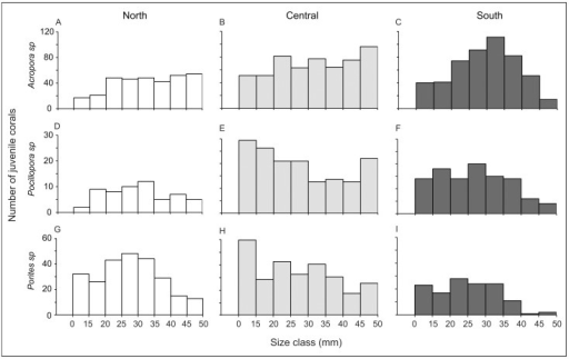 Size-class frequency distribution (mm) of juvenile corals ≤50 mm from the three main taxa: (A, B, and C) Acropora, (D, E and F) Pocillopora, and (G, H and I) Porites sp, at the northern (white), central (light grey ) and southern (dark grey) sectors of the GBR.Juveniles <10 mm have been added to the size class 10–14 mm.