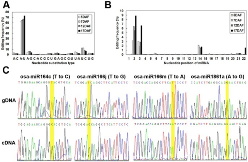 miRNA editing analysis.(A) Summary of the nucleotide substitution types observed in each library. (B) Summary of nucleotide substitution positions among miRNAs. (C) Validation of the editing sites inferred from deep sequencing via Sanger sequencing. Sequencing chromatogram traces from four miRNA sequences are shown. The edited positions are highlighted with yellow shading. The top trace is genomic DNA (gDNA), and the bottom trace is cDNA.