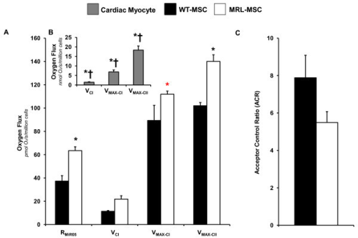 Oxygen flux in permeabilized wild-type mesenchymal stem cells (WT-MSC) and MRL/MpJ mesenchymal stem cells (MRL-MSC). (A) Routine respiration in MiR05 (RMiR05) in intact MSCs. State 2 oxygen consumption through Complex I supported by glutamate and malate (VCI) in digitoin-permabilized MSCs. State 3 or maximal oxygen consumption through Complex I supported by glutamate and malate (VMAX-CI) in digitoin-permabilized MSCs. State 3 or maximal oxygen consumption through Complex II supported by succinate (VMAX-CII) in digitoin-permabilized MSCs. (B) Given MSCs are transplanted into the infarcted heart, isolated, primary cardiac myocyte oxygen utilization is provided as a metabolic reference state. Cardiac myocyte state 2 oxygen consumption through Complex I supported by glutamate and malate (VCI) in digitoin-permabilized cardiac myocytes. State 3 or maximal oxygen consumption through Complex I supported by glutamate and malate (VMAX-CI) in digitoin-permabilized cardiac myocytes. State 3 or maximal oxygen consumption through Complex II supported by succinate (VMAX-CII) in digitoin-permabilized cardiac myocytes. (C) Acceptor control ratio (ACR; defined as VMAX-CI/VCI). n = 6-9, data are mean ± S.E.M. *p < 0.05 vs. WT-MSC. †p < 0.05 vs. MRL-MSC